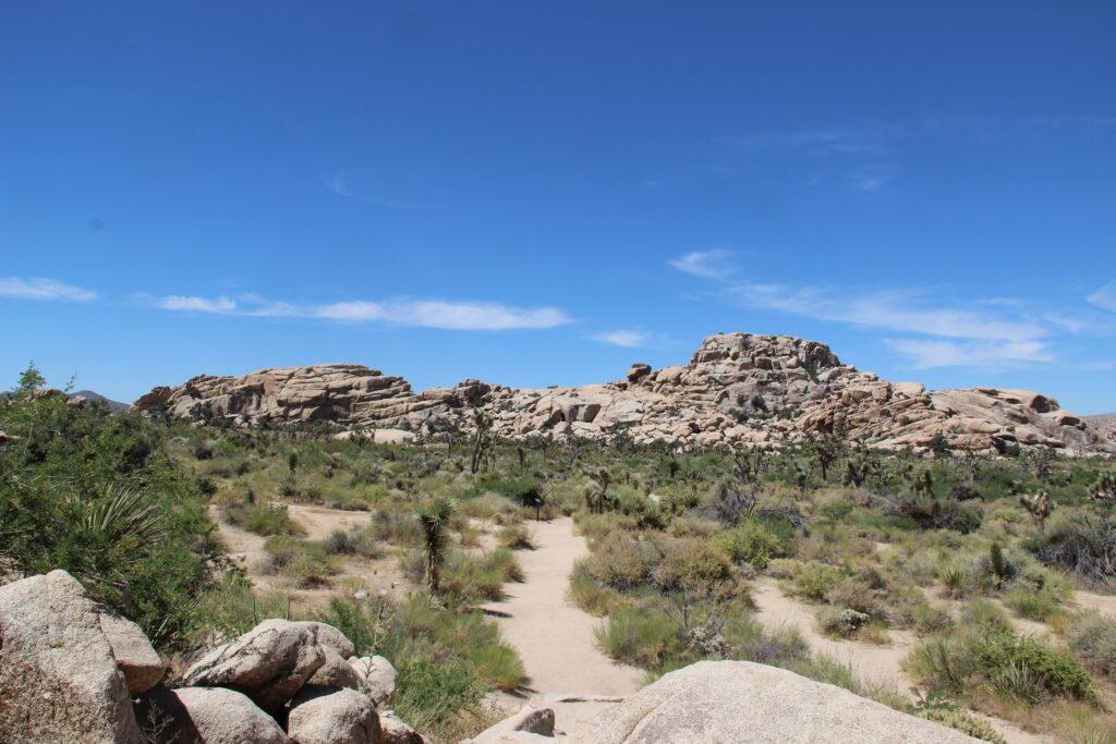 Landscape in Joshua Tree