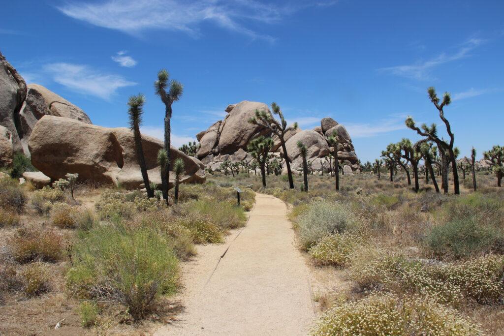 Trail in Joshua Tree