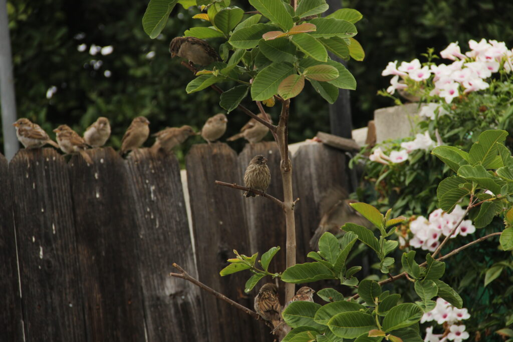 Birds on a fence and tree